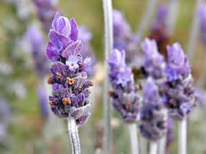Spiritual and Magical Properties of Essential Oils