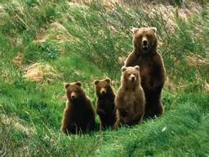 Mama Bear and 3 cubs