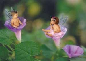Baby Faeries www.hitupmyspot.com I
