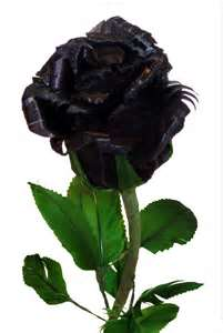 Black Ebony Rose