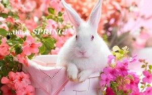 Bunny I