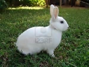 Bunny White www.123rf.com I