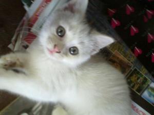 Cat My sweet Kitty