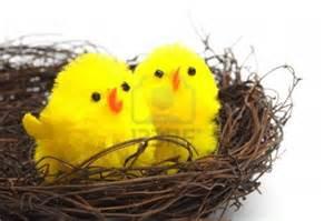 Chicks in Nest www.123rf.com I