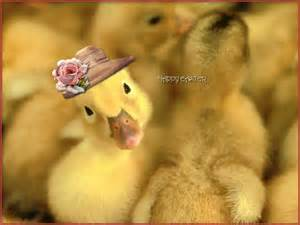 Duck in Hat www.free-hdwallpapers.com I