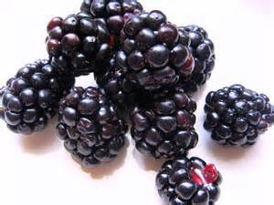 Blackberries www.eyewatering.wordpress.com I