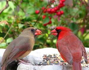 Cardinals www.psychicjoystar.wordpress.com I