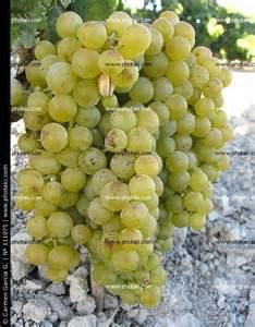 Grapes White www.photaki.com I