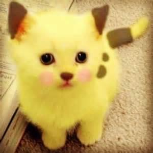 1 cute cat www.favim.com I