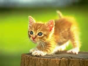 1 kitten yellow www.varbak.com I