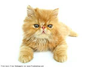 1 yellow kitty www.scenicreflections.com I