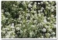 1 celery jpg.jpg I