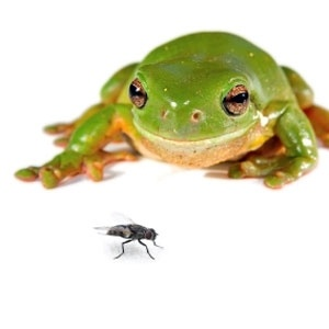 1 Frog