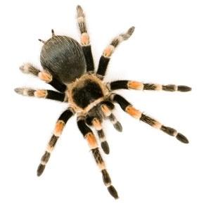 1 Spider