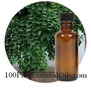 1 Camphor Essential Oil www.100pureessentialoils.com 2