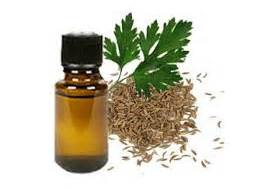 1 Parsley Essential Oil