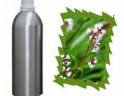 1 Essential Oil of Spikenard