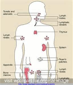 1 Immune System 3