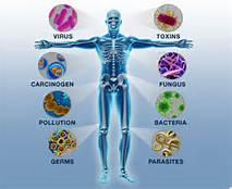 1 Immune System