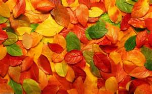 1 Autumn Leaves