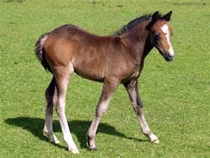 1 A Pony