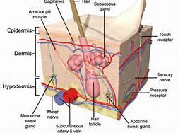 1 Skin System