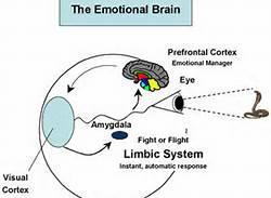 1 A Brain System