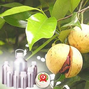 1 A Essential Oil of Nutmeg