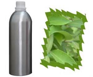 1 A Essential Oil of Verbena