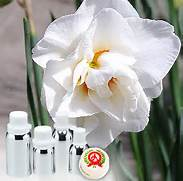 1 A Narcissus Essential Oil