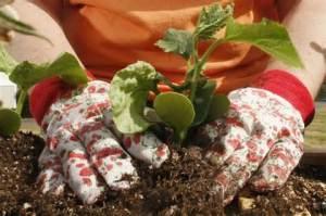 Gardening www.diylife.com 1