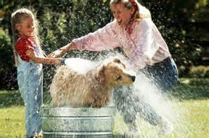 Washing a Dog