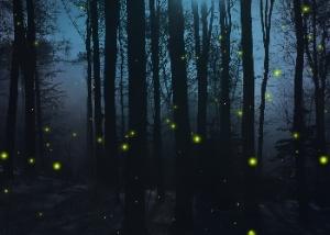 Firefly_Nights_Wallpaper_cevgr