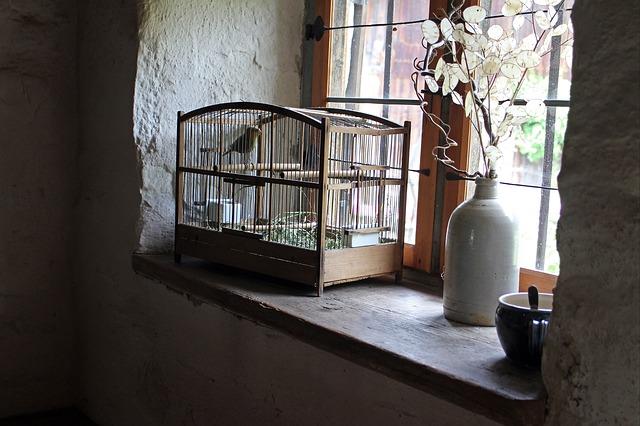 bird-cage-402205_640