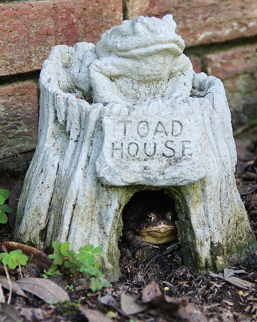 toad-328961_640