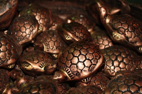 tortoise-166438_640