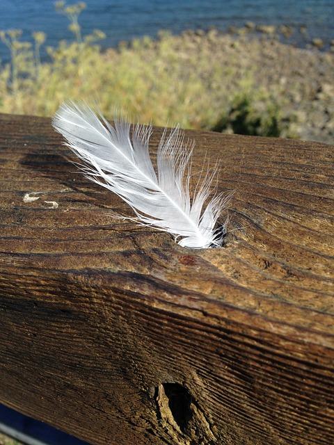 white-feather-834583_640