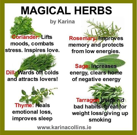 magical-herbs