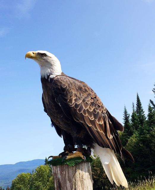 eagle-2211990_640