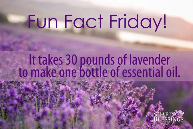 Fun Fact Friday Lavender