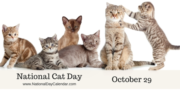 National-Cat-Day-October-29-1
