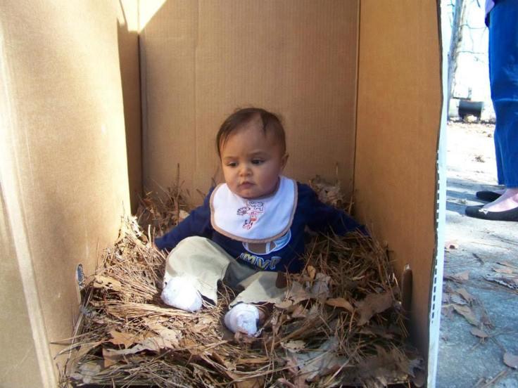 Phoenix in pine straw box